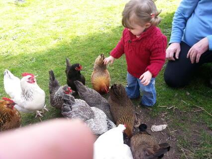 JE ME SUIS LACHEE LA 1ERE FOIS en voyant les poules de mamie