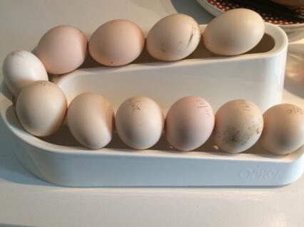 Un peu encombrante pour seulement 12 oeufs, mais parfaitement  adaptée à la taille des oeufs de mes poules Soie