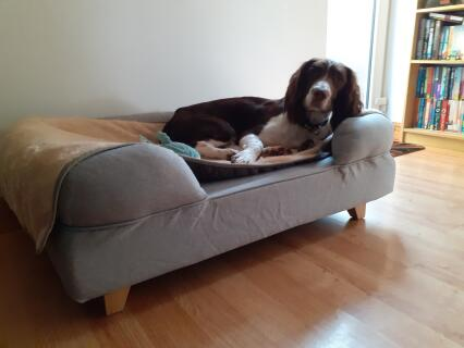 Jack enjoying a lounge on his new bed. It's fancier than our bed/sofa and he hasn't left it since it arrived!