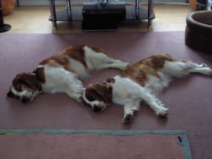 Chester and Tasha relaxing