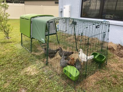 The girls love their new coop!