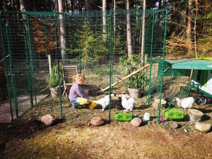Eglu run: happy hens