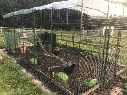 Our run is now 6x3x2 and the chickens love it!