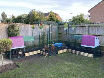 our ultimate chicken run!