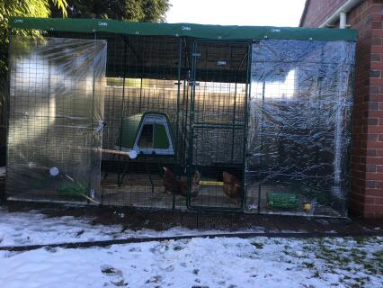 The return of the beast from the east isn't stopping these rescue chickens from having fun !