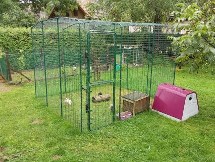 Iglu mit Hühnerauslauf