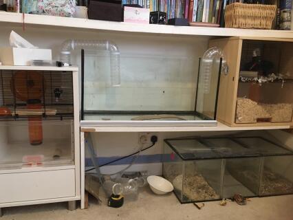 My huge gerbilarium, ready for some gerbils!!!