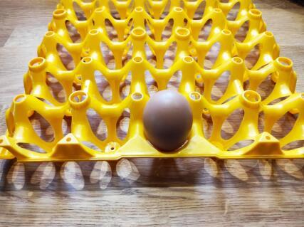Le tout premier oeuf de nos poules