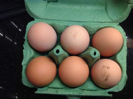 This weeks warren eggs
