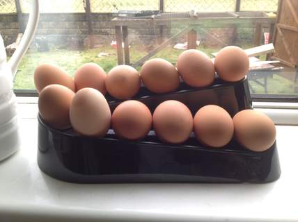 Egg ramp looks great in any kitchen