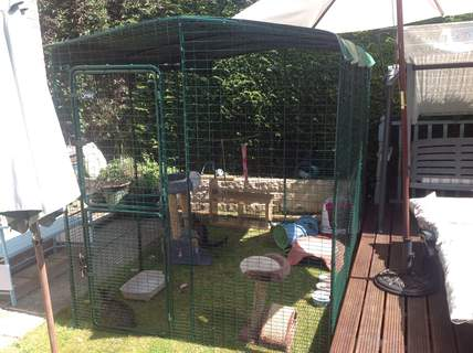 So pleased with my cat run. My cats are safe and can enjoy being outside,