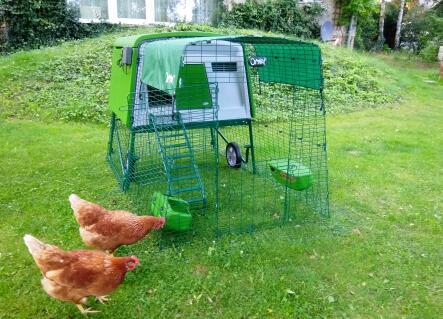 2 unserer 4 Hühner und der perfekte Hühnerstall