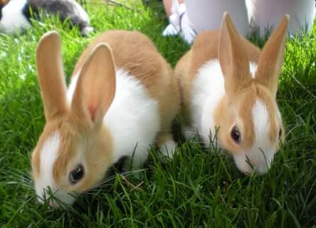 2 of my dutch baby rabbits