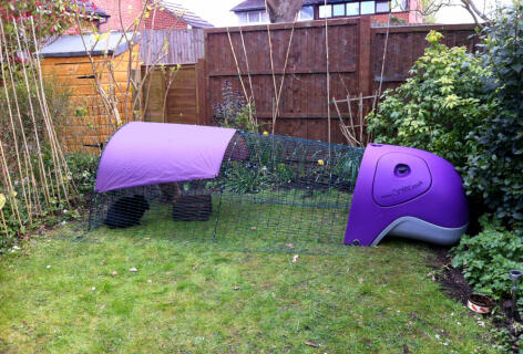 Daisy and Jasper in the Purple Rabbit Eglu