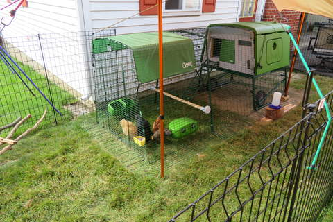 Our just-assembled Eglu coop and run ... our ladies and our tiny backyard approve!