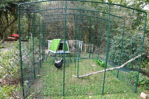 Eglu go up dans un grand enclos 4mx 3m x2m