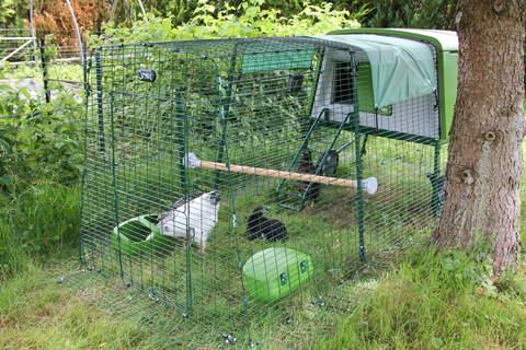 Nos poulettes ont adopté l'ensemble des équipements fourni avec l'Eglu Cube