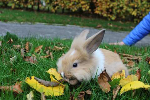 my rabbit autumn playing when its autmn!xx