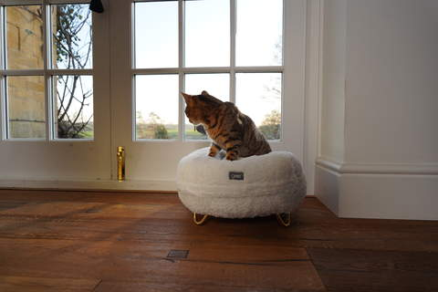 Loving the Omlet Donut cat bed!
