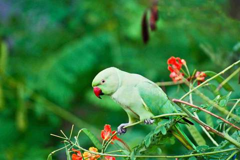 Five Talking Bird Species to Consider