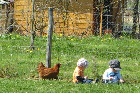 papotage et poules
