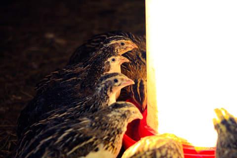 Pecking Order!!