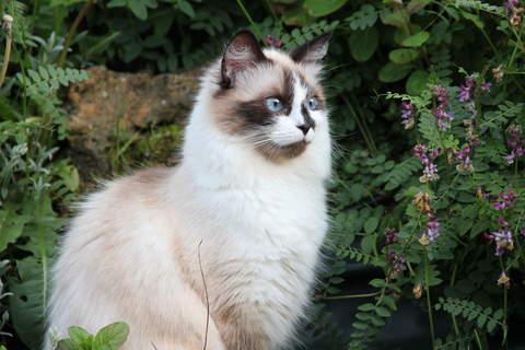 Maya adore explorer le jardin