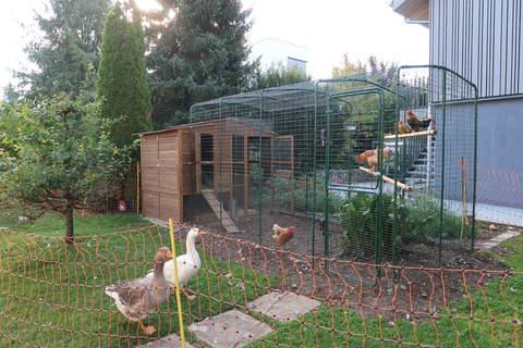 Gänse und Hühner sind glücklich und zufrieden