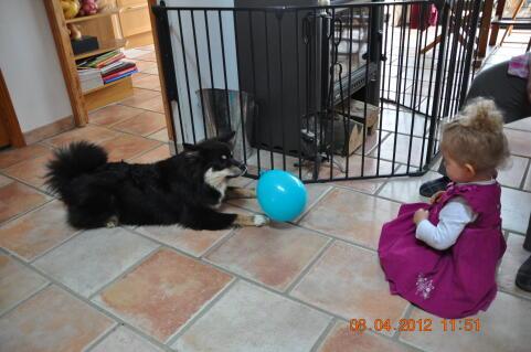 Grisha une race particulièrement douée avec les enfants  avec le museau elle renvoyait le ballon à la petite fille