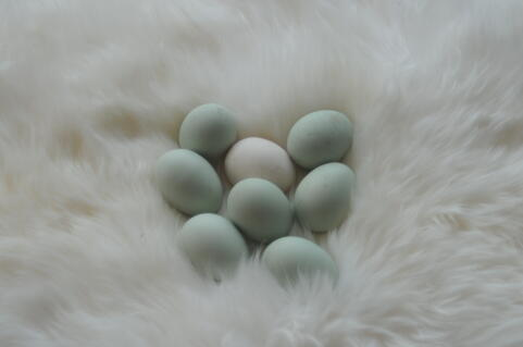 Green eggs from Rumpless Araucana