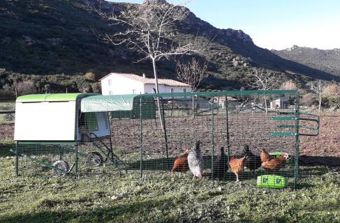 Grand eglu cube pour mes 7 poules (1 dans le pondoir) et 1 coq