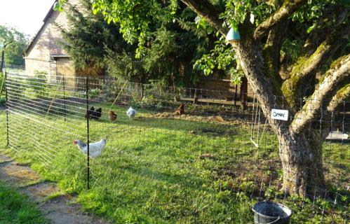 Bester Hühnerzaun den es gibt