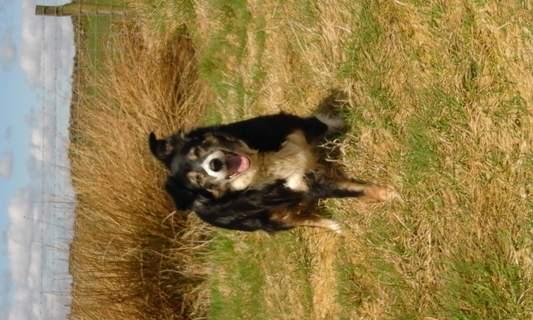 Meg the 14 year old dog