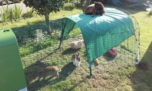le chat veille sur ses amis !