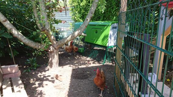 Unsere Hühner lieben den Cube