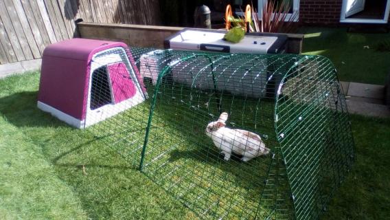 new cage! loving it!!