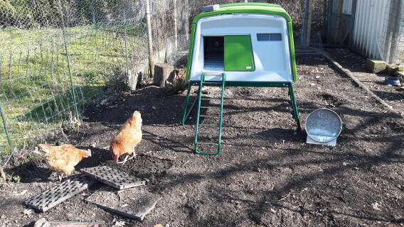 Eglu Cube Chicken Coop Chicken Coops Walk In Chicken