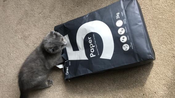 Moonpie loving her new cat litter!