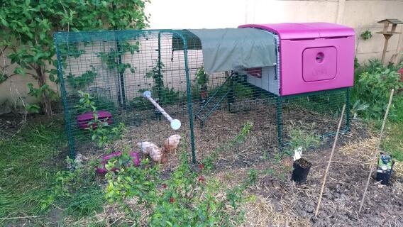 Poulailler exclu cube avec enclos 3m
