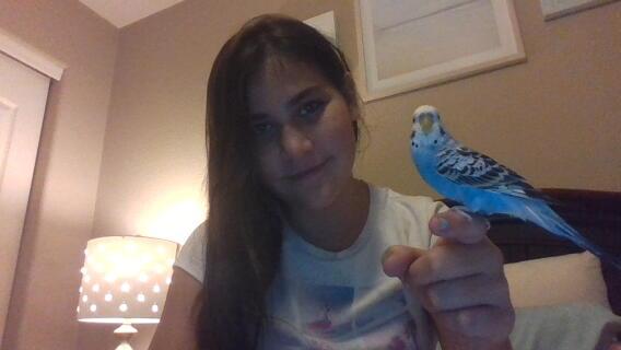 My beloved parakeet Max