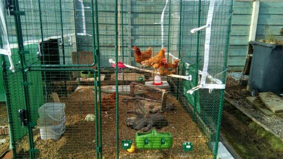 some of our hens enjoying their new omlet perch