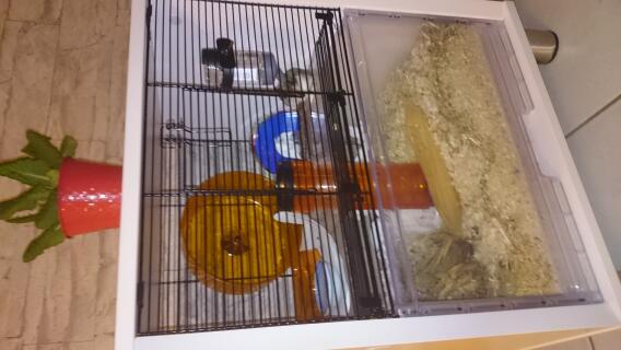 Très satisfait du Qute, notre hamster a très vite pris ses repères. Nous profitons un max de notre animal de compagnie.  Merci