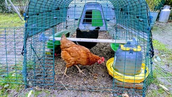 perchoir à poules
