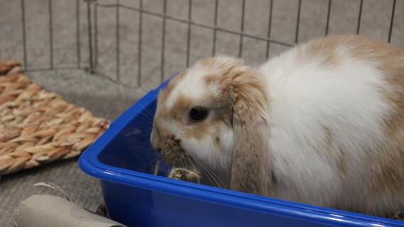 "My rabbit ""Binky"""