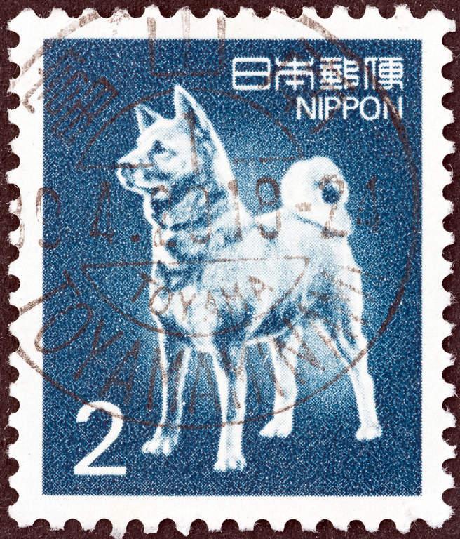 Japanese Spitz | Dogs | Breed Information | Omlet