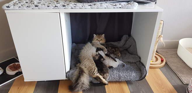 Niche pour chats
