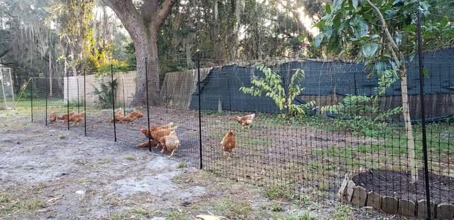 Omelet Chicken Fencing Mk2 - 138Ft