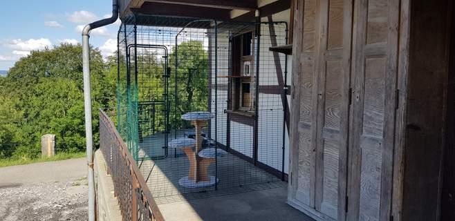 Tierschutzaktion Schweiz - verwilderte Katze auswildern mit Hilfe Omlet Gehege
