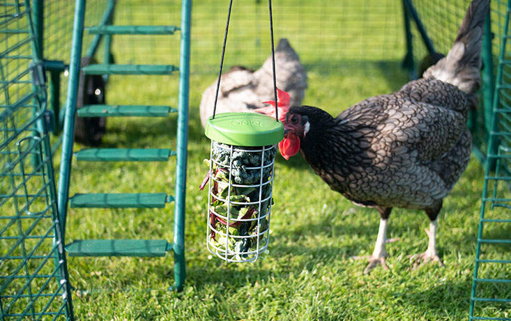 Not only does the Caddi offer a clean and tidy solution to feeding your hens, it will keep them entertained for hours!