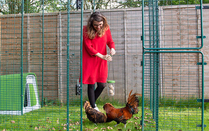 You can hang the Caddi Treat Holder from any chicken run thanks to the adjustable nylon string